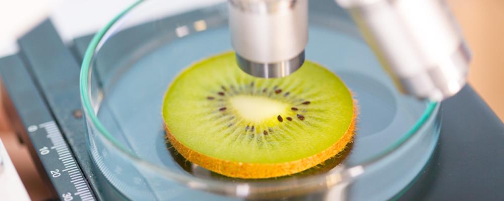 Food Testings Idma Laboratories Ltd